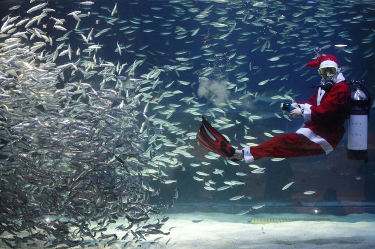 A diver dressed in a Santa Claus costume swims with sardines during a promotional event for the Christmas 'Sardines Feeding Show with Santa Claus' at the Coex Aquarium in Seoul, South Korea. (Kim Hong-Ji/Reuters)