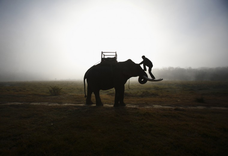 A mahout climbs his elephant as he heads towards the Chitwan National Park at Sauraha in Chitwan, about 170 km (106 miles) south of Kathmandu. Elephants and mahouts from Chitwan will participate in the Elephant Race event, that began on Wednesday and ends on Friday, where elephants will play in an exhibition soccer match and various other sports and activities. (Navesh Chitrakar/Reuters)