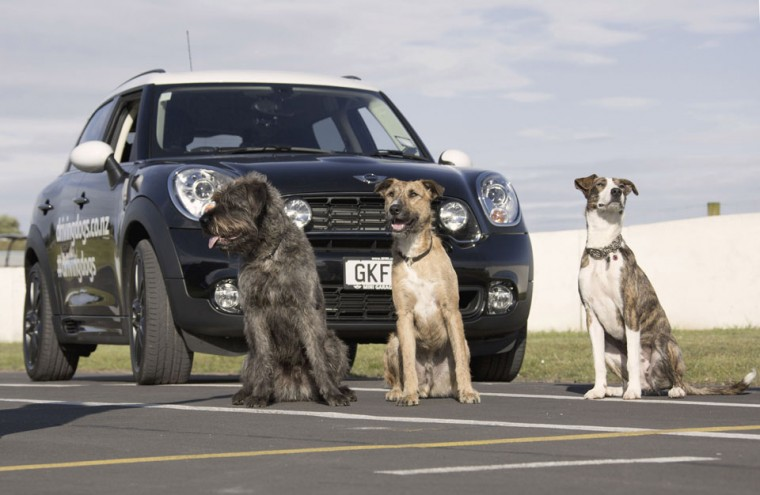 (L - R)New Zealand SPCA dogs Monty, Porter and Ginny sit in front of a modified Mini Countryman on a race track in Auckland in this December 10, 2012 handout picture. The SPCA said they trained three dogs to drive cars for a series of events to publicize the adoption of animals looked after by the shelter, claiming 'you can teach an SPCA dog new tricks.' (SPCA/Michael Bradley/Handout/Reuters)