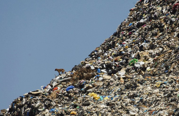 A stray dog stands on a rubbish dump at the seafront in Sidon, southern Lebanon, June 9, 2012. The dump, located near schools, hospitals and apartment blocks in Lebanon's third biggest city, has partially collapsed into the Mediterranean sea several times. (Ali Hashisho/Reuters)