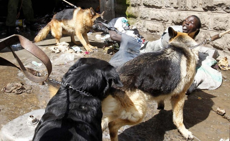 Police dogs attack a man found stealing from ethnic Somali homes during the second day of skirmishes in the Eastleigh neighborhood of Kenya's capital Nairobi, November 19, 2012. Police fired tear gas to disperse Kenyans who threw stones and broke into the homes and shops of ethnic Somalis in Nairobi's Somali-dominated Eastleigh neighborhood on Monday to protest against a bomb attack in the district on Sunday. (Thomas Mukoya/Reuters)