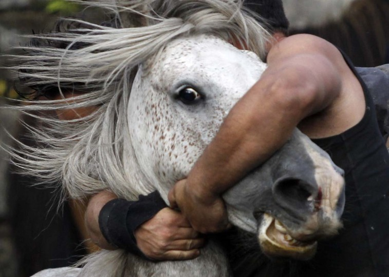 """A reveller tries to hold on to a wild horse during the """"Rapa Das Bestas"""" traditional event in the Spanish northwestern village of Sabucedo July 7, 2012. On the first weekend of the month of July, hundreds of wild horses are rounded up, trimmed and groomed in different villages in the Spanish northwestern region of Galicia. (Miguel Vidal/Reuters)"""
