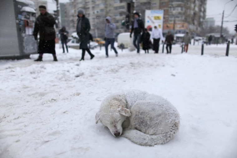 A stray dog sleeps in the snow as people pass by on a street in Bucharest January 26, 2012. Heavy snow and blizzards have swept across Romania over the past two days, not only causing chaotic traffic, blocking motorways and leaving hundreds stranded in snow, but also forcing the closure of the country's main Black Sea port. (Radu Sigheti/Reuters)