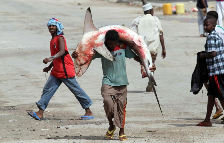 A fisherman carries a shark on his head and shoulders from the Indian Ocean waters to the market in Somalia's capital Mogadishu. Ismail Taxta/Reuters)