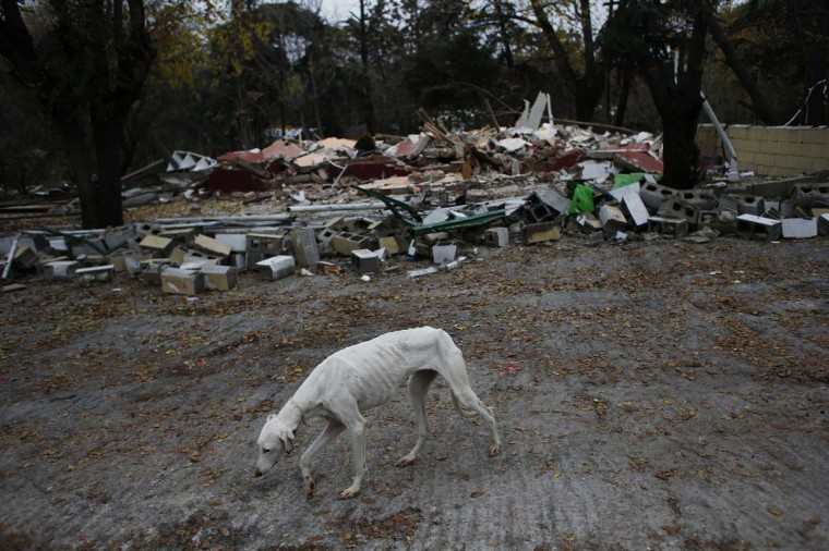 A greyhound walks next to the remains of the Gabarri-Valdes family home after a bulldozer demolished it at the Spanish gypsy settlement of Puerta de Hierro, in the outskirts of Madrid November 20, 2012. Fifty-four families had been living in Puerta de Hierro, on the banks of the Manzanares river for over 50 years. Since the summer of 2010, the community has been subject to evictions on the grounds that the dwellings are illegal. (Susana Vera/Reuters)