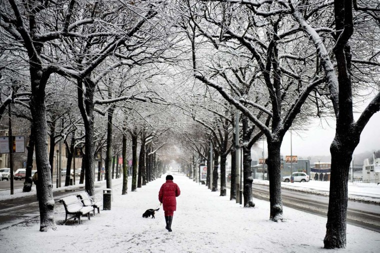 A woman walk her dog on a snow covered street in central Stockholm November 29, 2012. (Jessica Gow/Reuters)