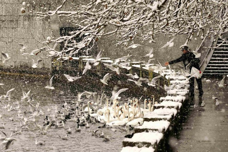 A man feeds birds as snow falls on the borders of Lake Zurich in Zurich December 2, 2012. (Arnd Wiegmann/Reuters)