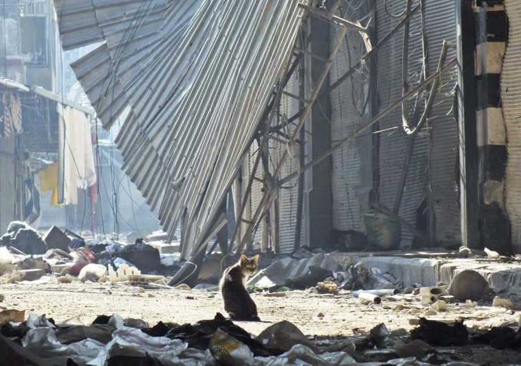 A cat stands among garbage in the damaged old souk of Homs November 15, 2012. Picture taken November 15, 2012. (Yazan Homsy/Reuters)