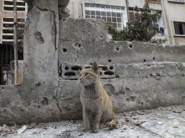 A cat sits in front of a damaged building at the al-Khalidiya neighbourhood of Homs. Picture taken December 3, 2012. (Yazan Homsy/Reuters)