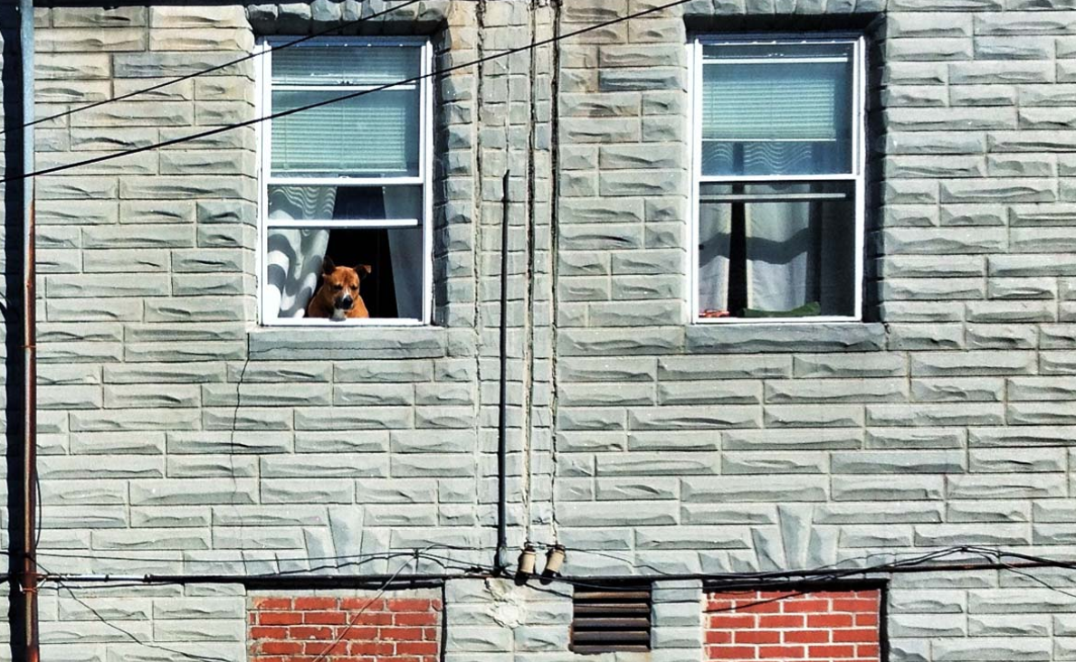 Instagrammer feature with @flynnfinity: Adventures in Baltimore with a dog named Bailey