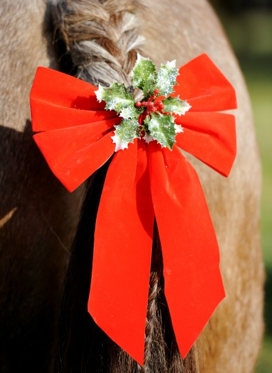 A holiday bow is pinned to the braided tail of a horse at the Lisbon Ole Fashion Christmas Horse Parade. (Jon Sham/BSMG)