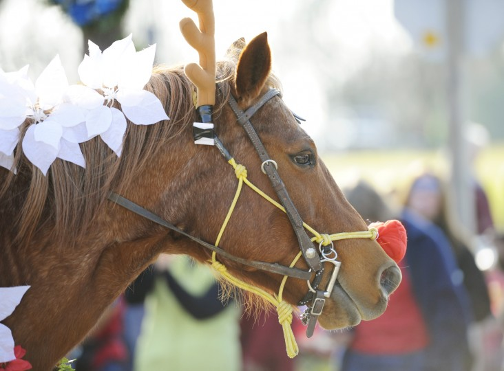 A horse dressed as Rudoplh the Red-Nosed Reindeer is led through the Christmas horse parade in Lisbon. (Jon Sham/BSMG)