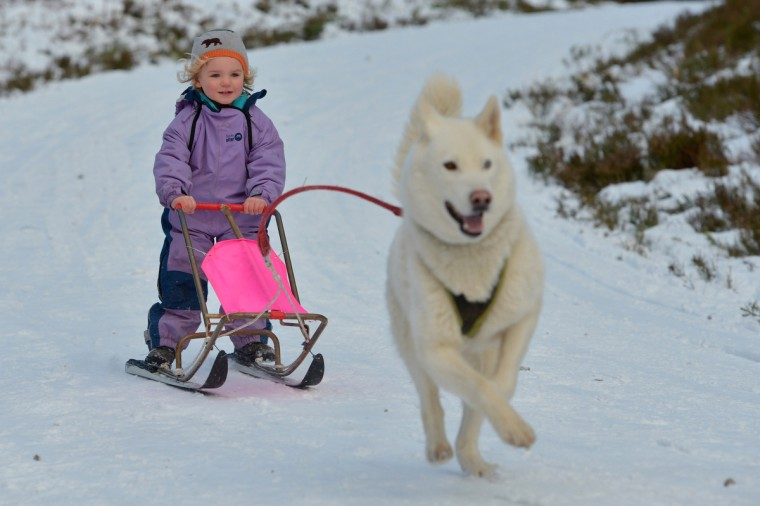Ella Sugars aged three years old from Kinloss, enjoys a ride on a sled pulled by a husky during practice for the Aviemore Sled Dog Rally in Feshiebridge, Scotland. Huskies and sledders prepare ahead of the Siberian Husky Club of Great Britain 30th anniversary race taking place this weekend near Aviemore. (Jeff J Mitchell/Getty Images)