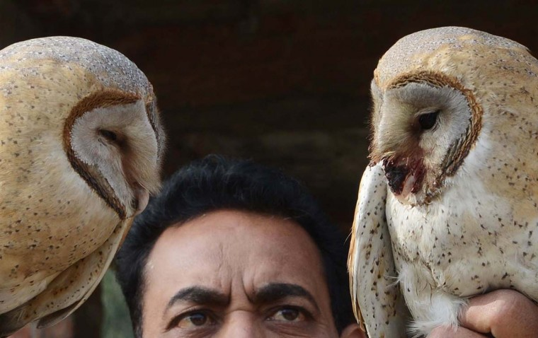 Indian Society for the Prevention of Cruelty to Animals (SPCA) inspector Ashok Joshi holds injured Barn Owls ,which was entangled in kite flying string in Amritsar on January 7, 2013. The Barn owls entangled in the kite string were rescued by SPCA members. (Narinder Nanu/AFP/Getty Images)