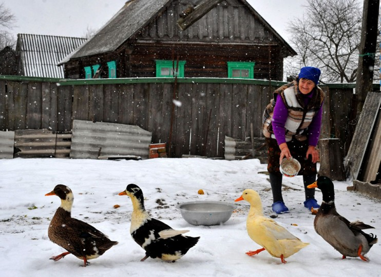 A woman feeds geese under snow fall in Pererov, a village located in central Belarus. (Viktor Drachev/AFP/Getty Images)