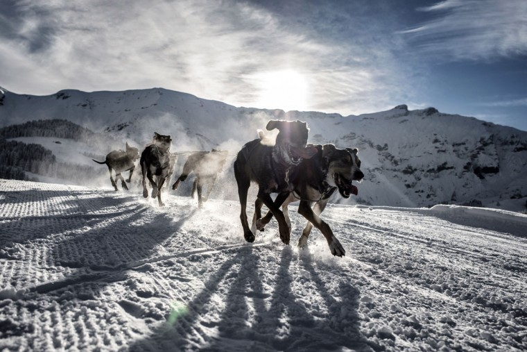 Dogs pull a sledge in Megeve during the departure of a stage of the Grande Odyssee sledding race. (Jeff Pachoud/AFP/Getty Images)
