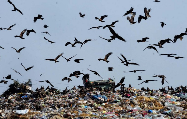 A Pakistani scavenger searches for recyclable materials at a landfill site in Lahore on January 22, 2013. (Arif Ali/AFP/Getty Images)