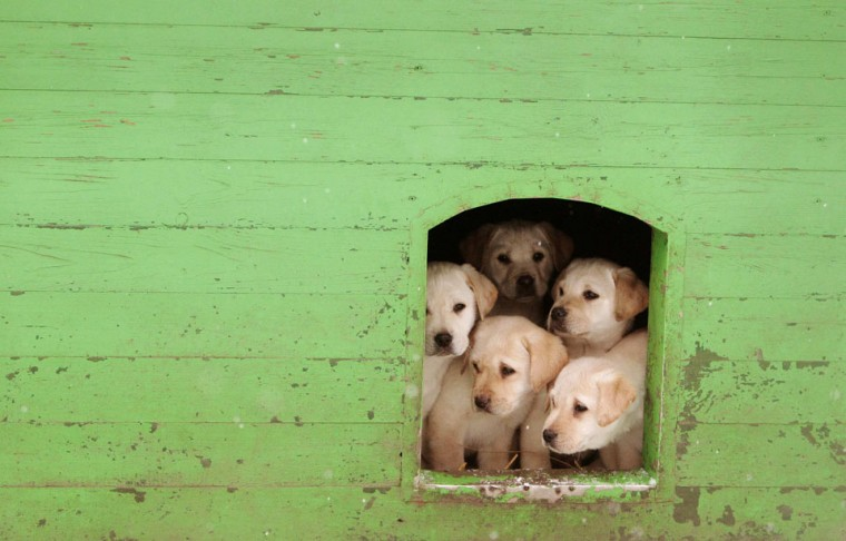 Puppies sit in kennel at a frontier guards' cynology centre near the town of Smorgon, some 140 km (87 miles) northwest of Minsk. The centre prepares instructors with trained dogs for guarding Belarus' border and also sells puppies and dogs, which are not fit for service at the border, to civilians in the country. (Vasily Fedosenko/Reuters)