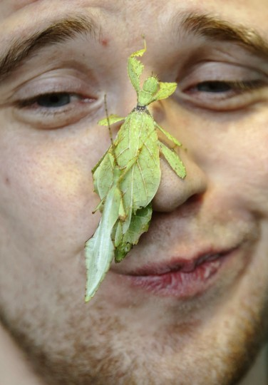 Zoo keeper Jeff Lambert poses with leaf insects during the annual stock take at London Zoo. The compulsory count of more than 17,500 animals is noted annually as part of the zoo's license, and the information is logged with the International Species Information System (ISIS), used for managing international breeding programs of endangered animals. (Luke MacGregor/Reuters)