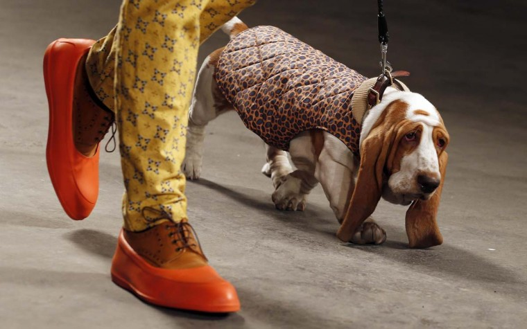 """A model and a dog present a creation from the MAN Autumn/Winter 2013 collection during """"London Collections: Men"""" in London January 7, 2013. """"London Collections: Men"""" is a three-day showcase of men's fashion scheduled a month before London Fashion week. (Suzanne Plunkett/Reuters)"""