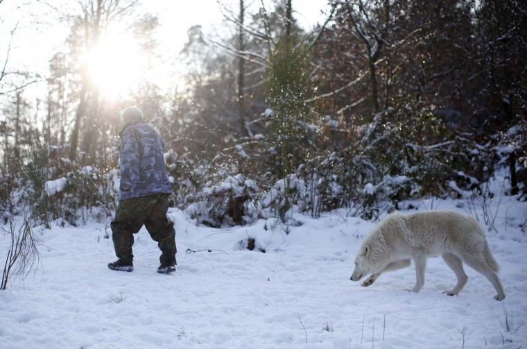 Wolf researcher Werner Freund is followed by an Arctic wolf in an enclosure at Wolfspark Werner Freund, in Merzig in the German province of Saarland January 24, 2013. (Lisi Niesner/Reuters)