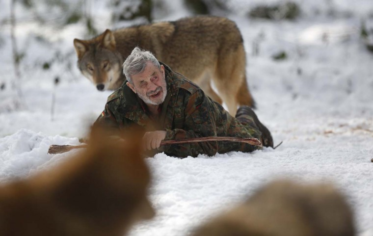 Wolf researcher Werner Freund is surrounded by Mongolian wolves in an enclosure at Wolfspark Werner Freund, in Merzig in the German province of Saarland January 24, 2013. The wolves, acquired as cubs from zoos or animal parks, were mostly hand-reared. (Lisi Niesner/Reuters)