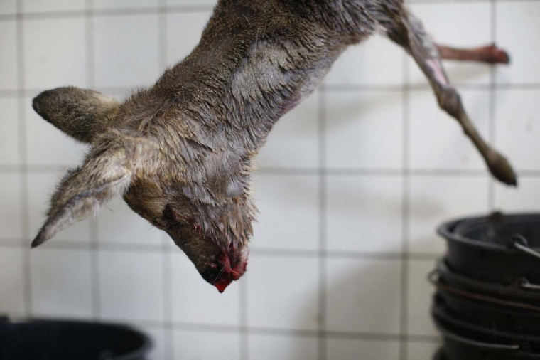 A hanged deer cadaver is pictured at Wolfspark Werner Freund, in Merzig in the German province of Saarland January 24, 2013. (Lisi Niesner/Reuters)