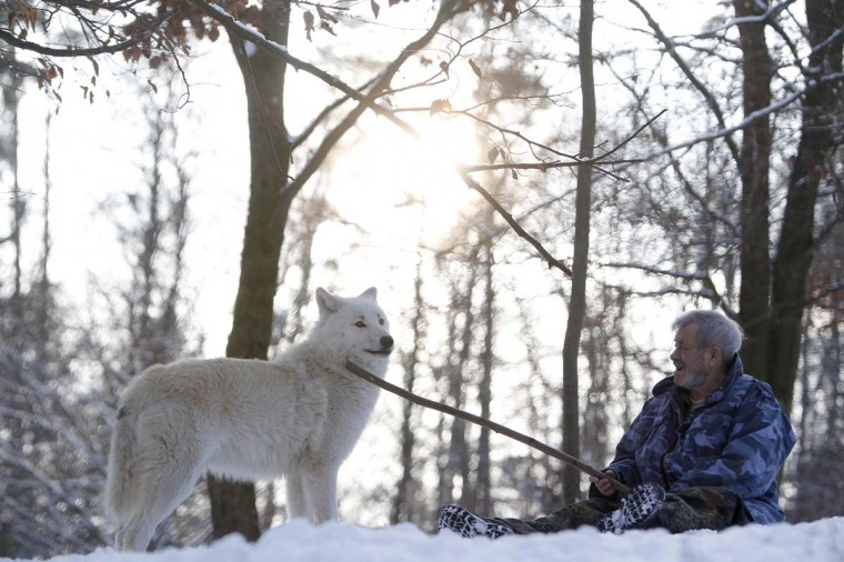 Wolf researcher Werner Freund strokes Arctic alpha wolf Monty with his walking stick in an enclosure at Wolfspark Werner Freund, in Merzig in the German province of Saarland January 24, 2013. (Lisi Niesner/Reuters)