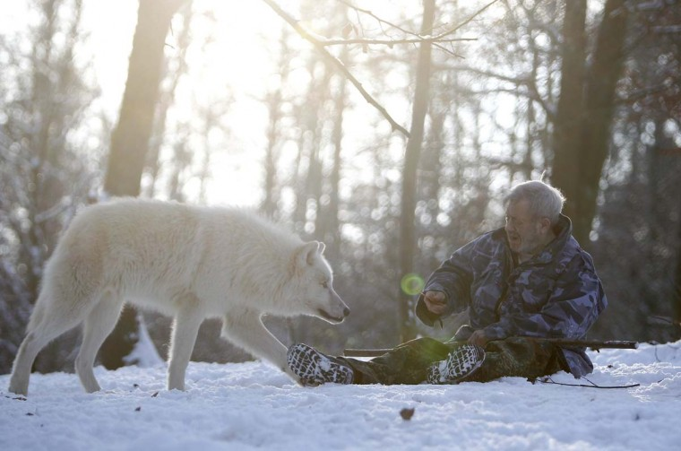 Wolf researcher Werner Freund holds out a treat as an Arctic wolf comes near an enclosure at Wolfspark Werner Freund, in Merzig in the German province of Saarland January 24, 2013. (Lisi Niesner/Reuters)