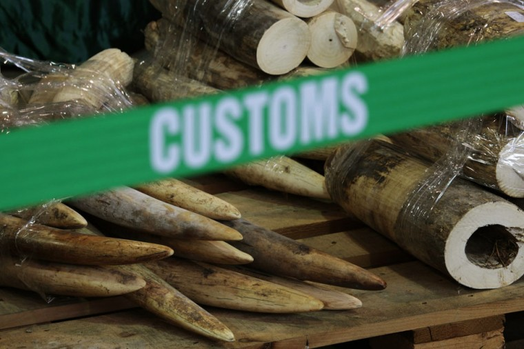 Part of a shipment of ivory tusks seized by customs officials from an imported container are displayed in Hong Kong. According to the customs department, 779 pieces of ivory tusks from Kenya weighing about 1,300 kg and worth about HK$10.6 million ($1.36 million) were confiscated from an imported shipping container sent from Malaysia to the Hong Kong port. (Bobby Yip/Reuters)