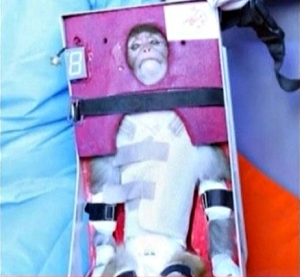 A still image from an undated video footage released on January 28, 2013 by Iran's state-run English language Press TV shows a monkey that was launched into space. Iran said on Monday it had launched the live monkey into space, seeking to show off missile delivery systems that are alarming to the West given Tehran's parallel advances in nuclear technology. (Press TV via Reuters)