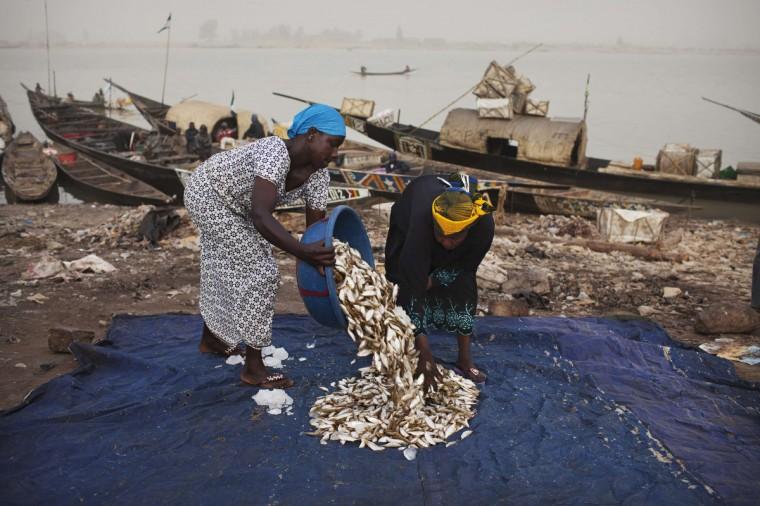 Women sort fish caught in the Timbuktu region at a port in Mopti. (Joe Penney/Reuters)