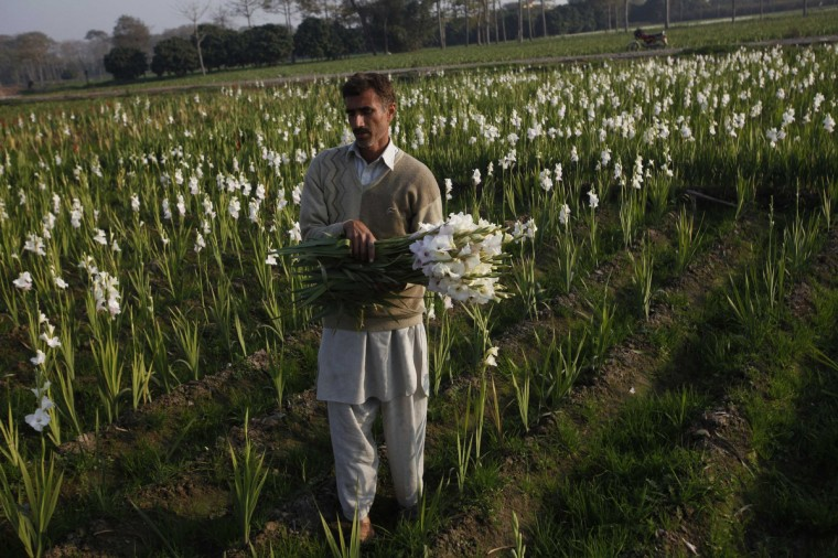 Javed, a farmer, carries a bunch of flowers in the field to be sold in local markets in Lahore. (Mohsin Raza/Reuters)