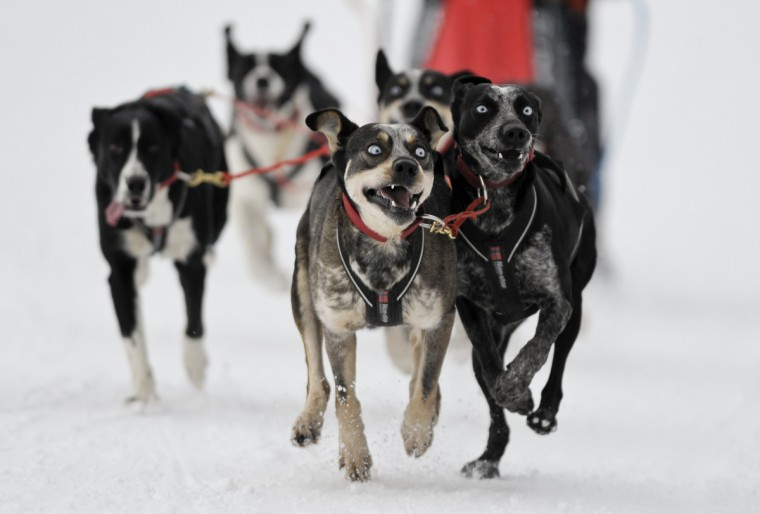A racer and his sleddogs take part in the Border Rush Race in The Giant Mountains National Park, in Jakuszyce. Border Rush is an international sleddog race run which starts in Jakuszyce in the Czech-Poland border region. (Pawel Sosnowski/Reuters photo)