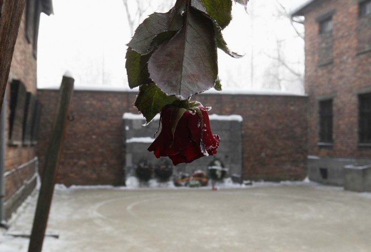 "A rose hangs near the ""Death Wall"" at the Auschwitz concentration camp during a ceremony marking the 68th anniversary of the liberation of Auschwitz by Soviet troops, and to remember the victims of the Holocaust, in Auschwitz-Birkenau January 27, 2013. (Peter Andrews/Reuters)"