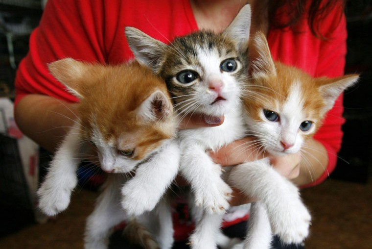 A woman holds kittens in a private volunteer animal shelter, Totoshka, in the southern Russian city of Rostov-on-Don. The shelter, operated on charity, has treated and found new owners for more than 500 stray cats and dogs since it was established by a group of enthusiasts in 2011. (Vladimir Konstantinov/Reuters)
