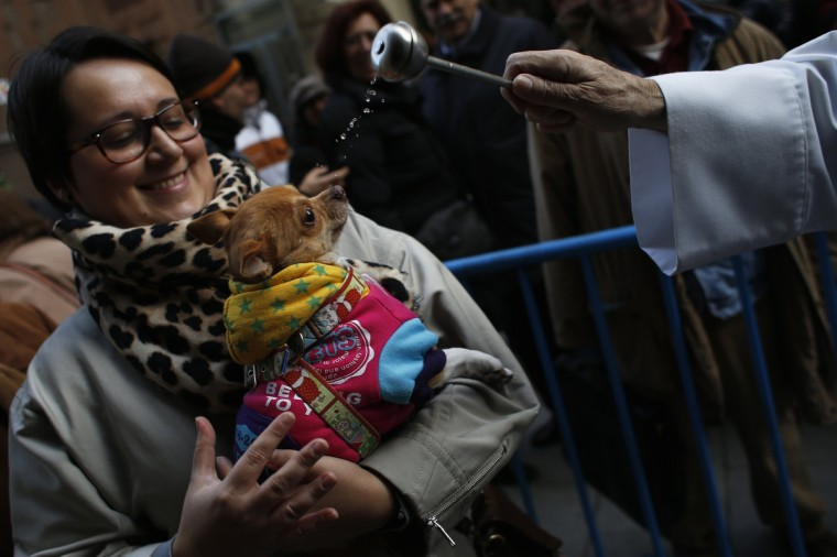 A priest blesses a dog outside San Anton church in Madrid. Hundreds of pet owners bring their animals to be blessed every year on the day of San Anton, Spain's patron saint of animals. (Juan Medina/Reuters photo)