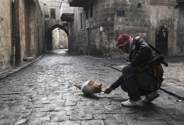 A Free Syrian Army fighter feeds a cat in the old city of Aleppo January 6, 2013. (Muzaffar Salman/Reuters)