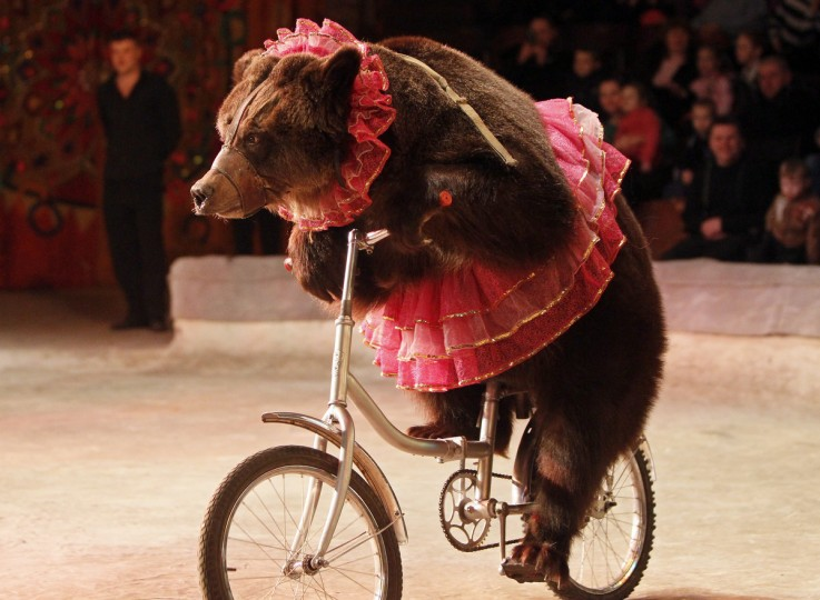 """A bear rides a bicycle during a show presenting the new program """"From Heart to Heart"""" at the National circus in the Ukrainian capital Kiev.(Gleb Garanich/Reuters)"""