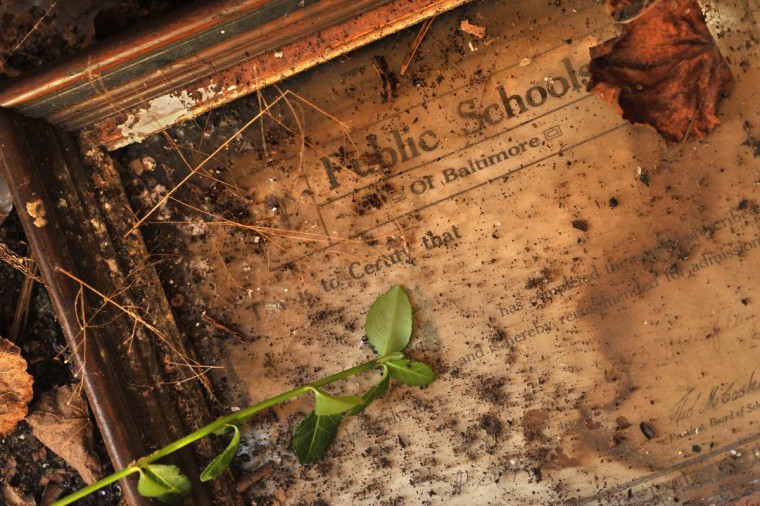 A plant stem works its way into the vestibule of this uninhabited dwelling in the Scott Settlement at Bare Hills, where a debris-covered school diploma was discarded with other remnants of family life. (Amy Davis/Baltimore Sun)