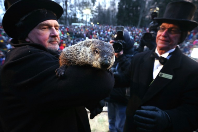 Groundhog co-handler John Griffiths (left) holds Punxsutawney Phil as co-handler Ron Ploucha (R) looks on after Phil didn't see his shadow and predicting an early spring during the 127th Groundhog Day Celebration  at Gobbler's Knob on February 2, 2013 in Punxsutawney, Pennsylvania. The Punxsutawney 'Inner Circle' claimed that about 35,000 people gathered at the event to watch Phil's annual forecast. (Photo by Alex Wong/Getty Images)