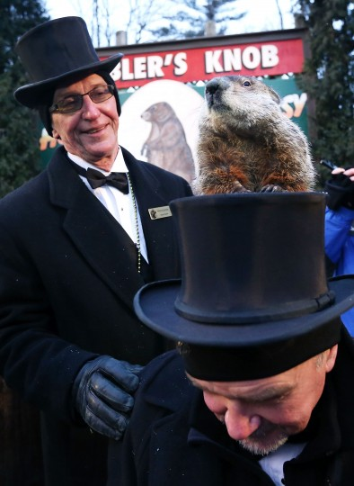 Punxsutawney Phil climbs on the top hat of groundhog co-handler John Griffiths (R) as co-handler Ron Ploucha (L) looks on after Phil didn't see his shadow and predicting an early spring during the 127th Groundhog Day Celebration at Gobbler's Knob on February 2, 2013 in Punxsutawney, Pennsylvania. The Punxsutawney 'Inner Circle' claimed that there were about 35,000 people gathered at the event to watch Phil's annual forecast.  (Photo by Alex Wong/Getty Images)