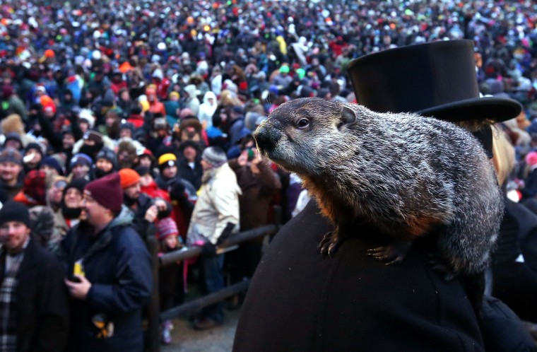 Punxsutawney Phil climbs on the shoulder of groundhog co-handler John Griffiths after Phil didn't see his shadow and predicting an early spring during the 127th Groundhog Day Celebration at Gobbler's Knob on February 2, 2013 in Punxsutawney, Pennsylvania. The Punxsutawney 'Inner Circle' claimed that there were about 35,000 people gathered at the event to watch Phil's annual forecast.  (Photo by Alex Wong/Getty Images)