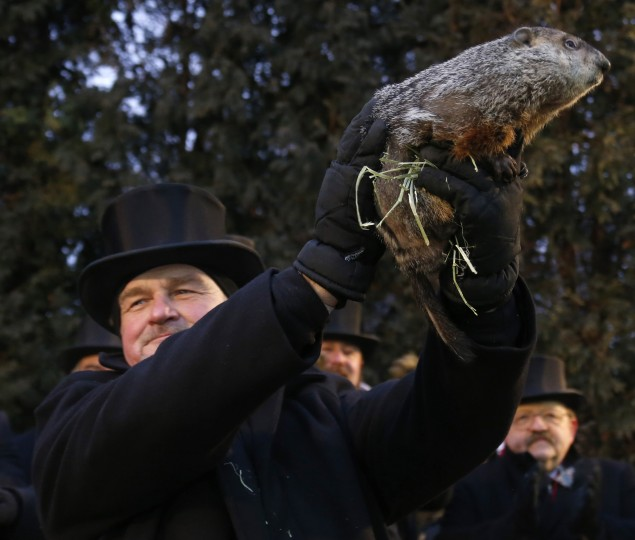 Groundhog co-handler John Griffiths holds up groundhog Punxsutawney Phil before Phil's annual weather prediction on Gobbler's Knob in Punxsutawney, Pennsylvania, on the 127th Groundhog Day, February 2, 2013. Phil did not see his shadow signaling an early end to winter. REUTERS/Jason Cohn