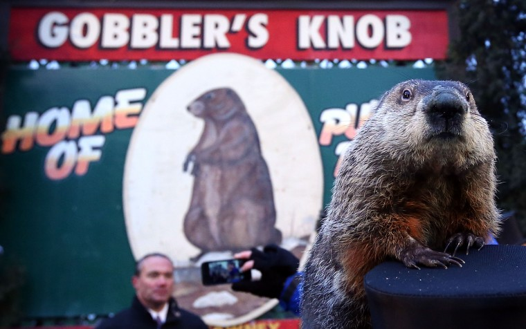 Groundhog Punxsutawney Phil climbs on the top hat of his handler after Phil did not see his shadow and predicting an early spring during the 127th Groundhog Day Celebration at Gobbler's Knob on February 2, 2013 in Punxsutawney, Pennsylvania. The Punxsutawney 'Inner Circle' claimed that there were about 35,000 people gathered at the event to watch Phil's annual forecast.  (Photo by Alex Wong/Getty Images)