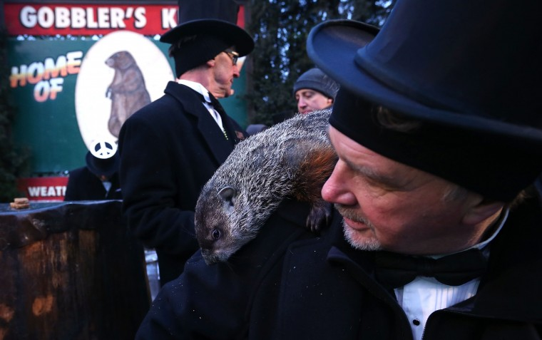 Punxsutawney Phil climbs on the shoulder of groundhog co-handler John Griffiths (R) after Phil did not see his shadow and predicting an early spring during the 127th Groundhog Day Celebration at Gobbler's Knob on February 2, 2013 in Punxsutawney, Pennsylvania. The Punxsutawney 'Inner Circle' claimed that there were about 35,000 people gathered at the event to watch Phil's annual forecast.  (Photo by Alex Wong/Getty Images)