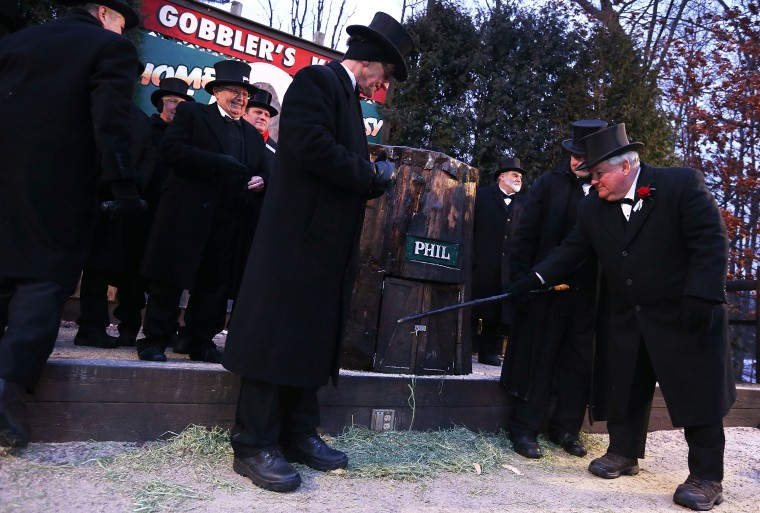 President Bill Deeley (R) of Punxsutawney's 'Inner Circle' tap on the door of Punxsutawney Phil's burrow as he and groundhog co-handlers John Griffiths (2nd R) and Ron Ploucha (3rd L) entice Phil out during the 127th Groundhog Day Celebration at Gobbler's Knob on February 2, 2013 in Punxsutawney, Pennsylvania. The Punxsutawney 'Inner Circle' claimed that there were about 35,000 people gathered at the event to watch Phil's annual forecast. Phil did not see his shadow and predicting an early spring. (Photo by Alex Wong/Getty Images)