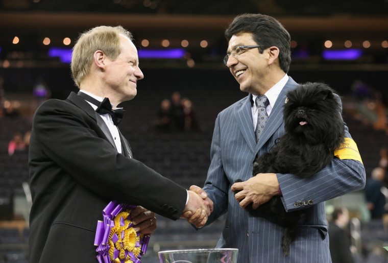 Best in Show judge Michael Dougherty (L), congratulates dog handler Ernesto Lara after his dog Banana Joe, an Affenpincher, won the 137th Westminster Kennel Club Dog Show in New York City. A total of 2,721 dogs from 187 breeds and varieties competed in the event, hailed by organizers as the second oldest sporting competition in America, after the Kentucky Derby. (John Moore/Getty Images)