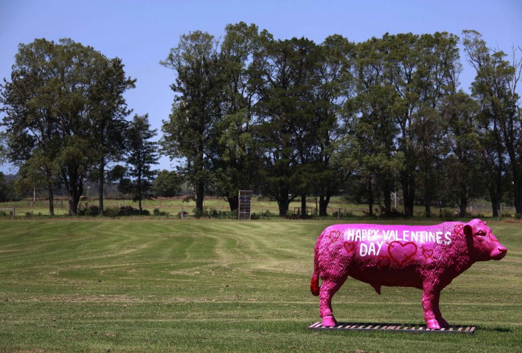 "A sculpture in the shape of cow with the words ""Happy Valentine's Day"" painted on the side, is pictured at a paddock on the outskirts of the town of Nowra. (David Gray/Reuters)"