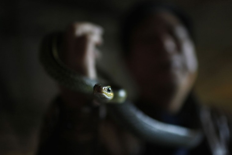 "A worker holds a snake at a snake farm in Zisiqiao village, Zhejiang Province. Residents of Zisiqiao village, also known as ""Snake Town"", raise over 3 millions snakes a year whose meat is sold to food manufacturers and their venom to pharmaceutical companies, according to local media. (Aly Song/Reuters)"